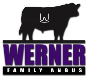 Werner Family Angus